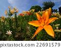 花兒喜歡陽光 22691579