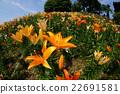 盛開的鮮花 22691581