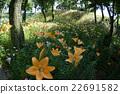 盛開的鮮花 22691582
