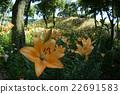 盛開的鮮花 22691583