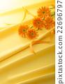 非洲菊 花朵 花 22696797