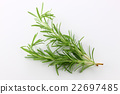 rosemary, herb, herbal 22697485