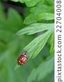 瓢蟲 蟲子 漏洞 22704008