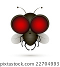 House fly insect 22704993