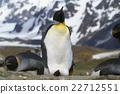 帝王企鵝 企鵝 禽 22712551
