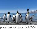 帝王企鵝 企鵝 海岸 22712552
