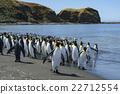 帝王企鵝 企鵝 海岸 22712554