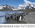 帝王企鵝 企鵝 海濱 22712555