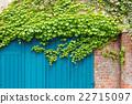 常春藤 葉子 樹葉 22715097