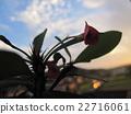 Cacti และท้องฟ้า 22716061
