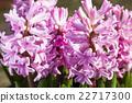 蜜蜂 昆蟲 花朵 22717300