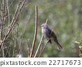 鳥兒 鳥 禽 22717673