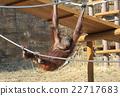 猩猩 猴 穴居人 22717683