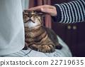 cat, pet, owner 22719635