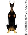 动物 杜宾犬 狗 22722565