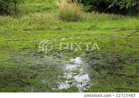 無底沼澤,沼澤,濕地 22725485