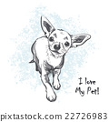 Funny smooth-haired chihuahua 22726983