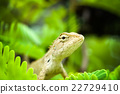 Brown chameleon on the tree 22729410