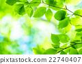 신록, 초여름, 새잎 22740407