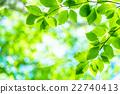 翠綠 鮮綠 初夏 22740413