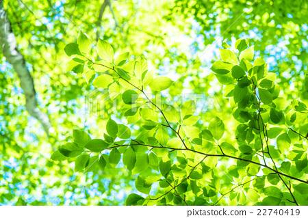 Fresh green eco image 22740419