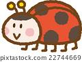 瓢蟲 昆蟲 蟲子 22744669