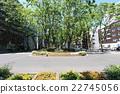 街道树 行道树 光叶榉 22745056