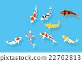锦鲤 鲤鱼 鱼 22762813