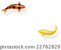 锦鲤 鲤鱼 鱼 22762820