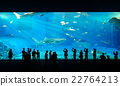 People watching giant whale shark in aquarium 22764213