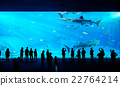 People watching giant whale shark in aquarium 22764214