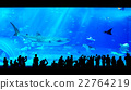 People watching giant whale shark in aquarium 22764219