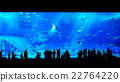 People watching giant whale shark in aquarium 22764220