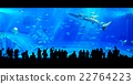 People watching giant whale shark in aquarium 22764223
