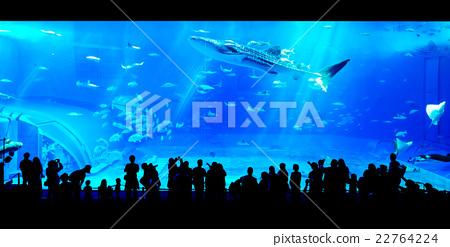 People watching giant whale shark in aquarium 22764224