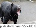 bear, bears, animal 22774019