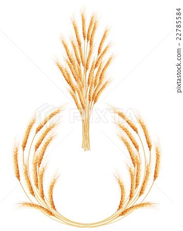Set of 2 detailed Wheat ears. EPS 10 22785584