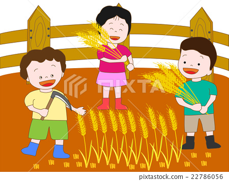 矢量 小麥 收穫 22786056