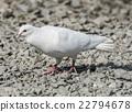White Release Dove 22794678
