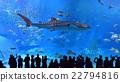 水族館 沖繩美麗海水族館 水箱 22794816
