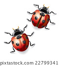 Ladybugs vector illustration. 22799341