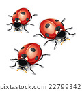 Ladybugs vector illustration. 22799342