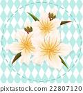 white peach blossom flower illustration vector 22807120