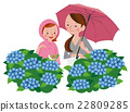 Hydrangea and parent and child 22809285