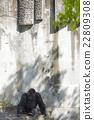 動物 西部低地大猩猩 東山動植物園 22809308