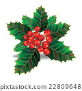 Beautiful holly christmas branch decoration. 22809648