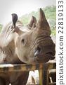 Rhinoceros closeup in the public zoo 22819133