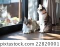 猫咪 猫 波斯猫 22820001