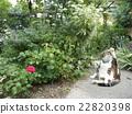 猫 猫咪 小猫 22820398