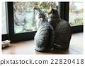 猫咪 猫 波斯猫 22820418